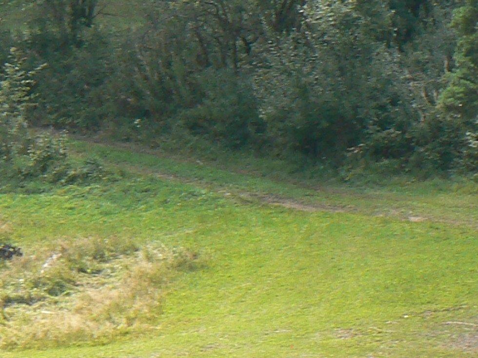Obec by chtěla dotaci na opravu lesních cest. Ilustrační foto.
