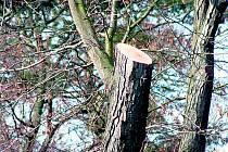 Úpravy dřevin ve Štěpánčině parku.