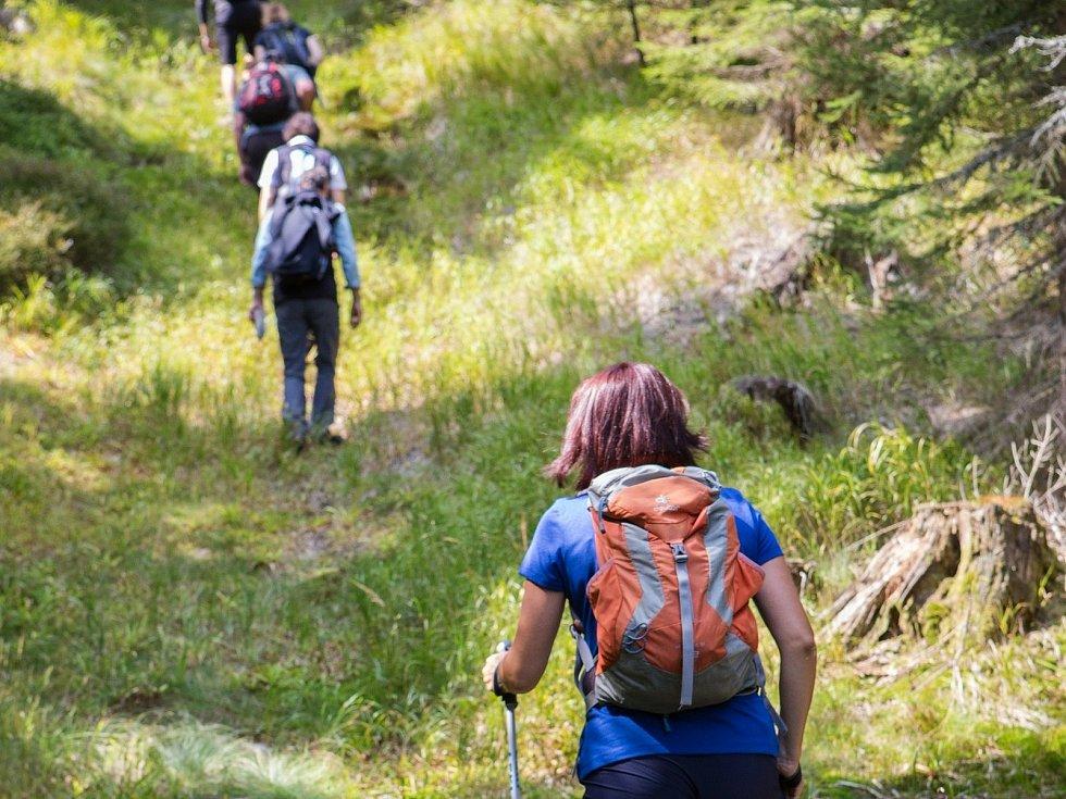 Průvodci divočinou po Národním parku Šumava. Ilustrační foto.