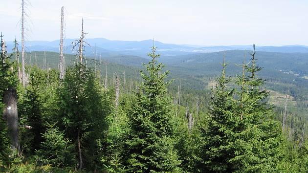Národní park Šumava, srovnání snímků, rok 2017.