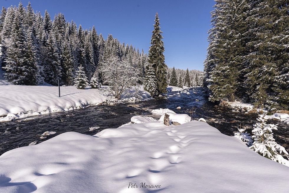 Šumava v lednu 2021