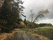 """""""Manžel jede směr Lažiště přes Oseky, snaží se popadané stromy odtáhnout,"""" informovala Jana Tetourová z Prachatic."""