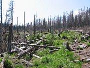 Národní park Šumava, srovnání snímků, rok 2006.