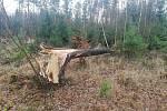 Popadané stromy na Netolicku.