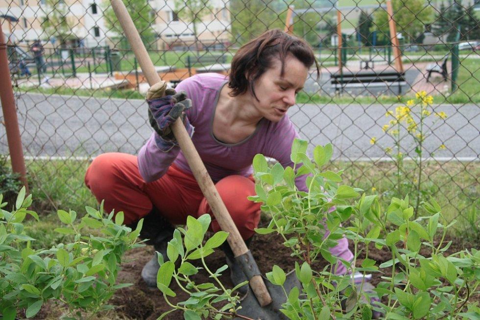 V areálu Základní školy v Národní ulici v Prachaticích vznikne nová zahrada.