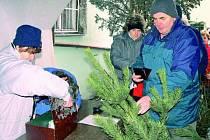 STROMKY V PRODEJI. Každý rok lze stromky zakoupit u prodejců. Vydávat se do lesa s pilkou je zbytečné riziko, které se navíc i prodraží.  Ilustrační foto.