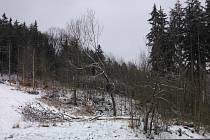 Smrky  napadené kůrovcem v okolí Hüblerovy kaple mezi Sluneční loukou a Stromky museli pracovníci Městských lesů Prachatice kompletně pokácet.