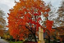 Podzim v Prachaticích.