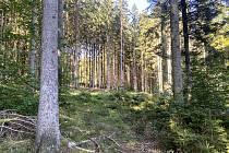 Areál lesních her se rozroste o třetí etapu, která bude bliž cyklostezce.