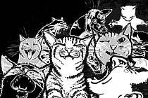 Kočky vyhnaly chasníka z Chalupy