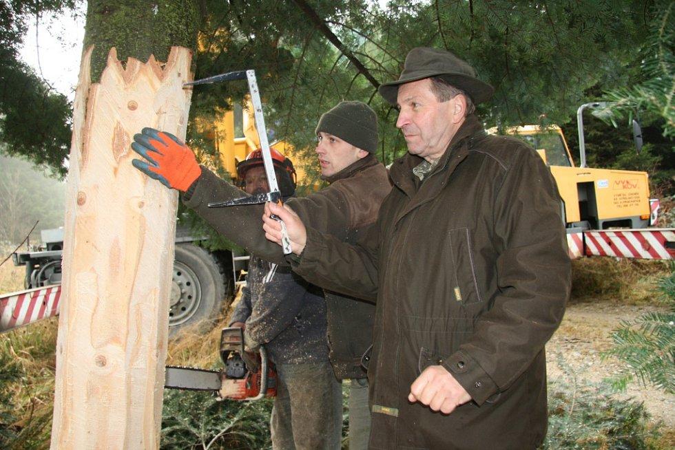 Více než metr a půl spodní části kmene vánočního stromu zmizí v šachtě, zatím je průměr pořád ještě velký.