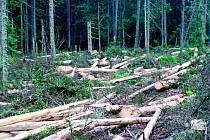 Ležící dřevo někdo zlikvidoval.