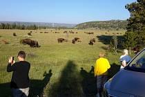Uvítání máme zcela opravdu grandiózní. U cesty se pase stádo bizonů.