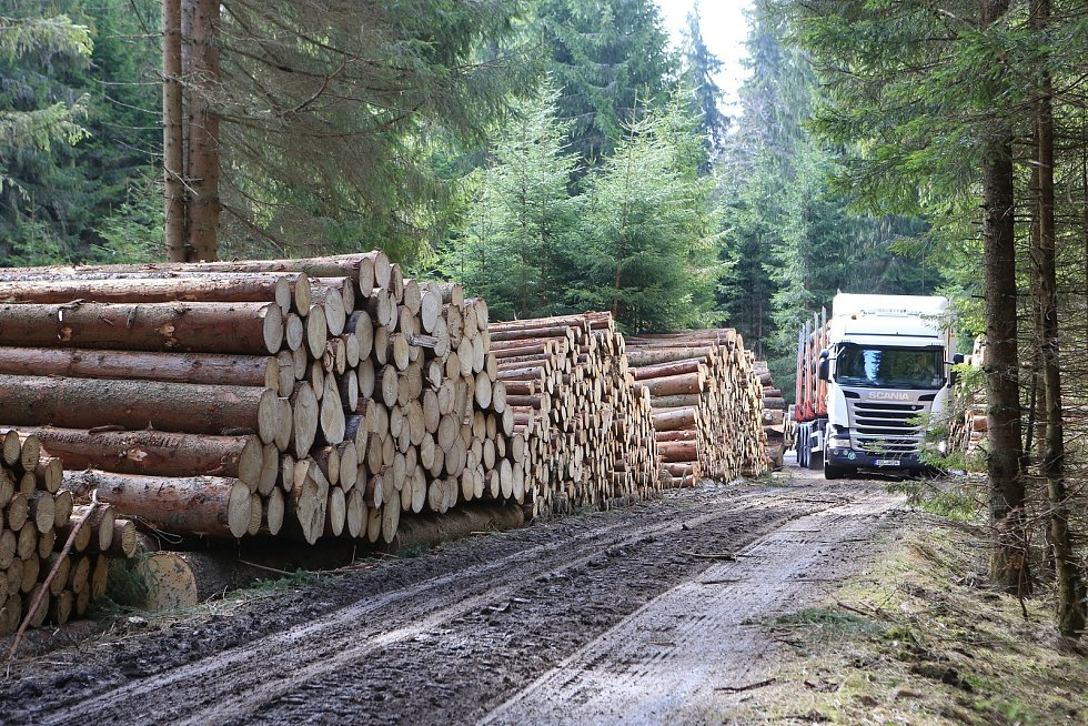 Správa NP Šumava uzavřela dvě turistické trasy. Důvodem je trvající zpracovávání polomového dříví po větrných bouřích z loňského roku.