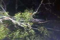 Strom přes cestu poblíž Blažejovic si šoféři v noci na čtvrtek 24. června sami odstranili. Miroslav Dvořák se pak při objíždění stromu střetl s protijedoucím autem.