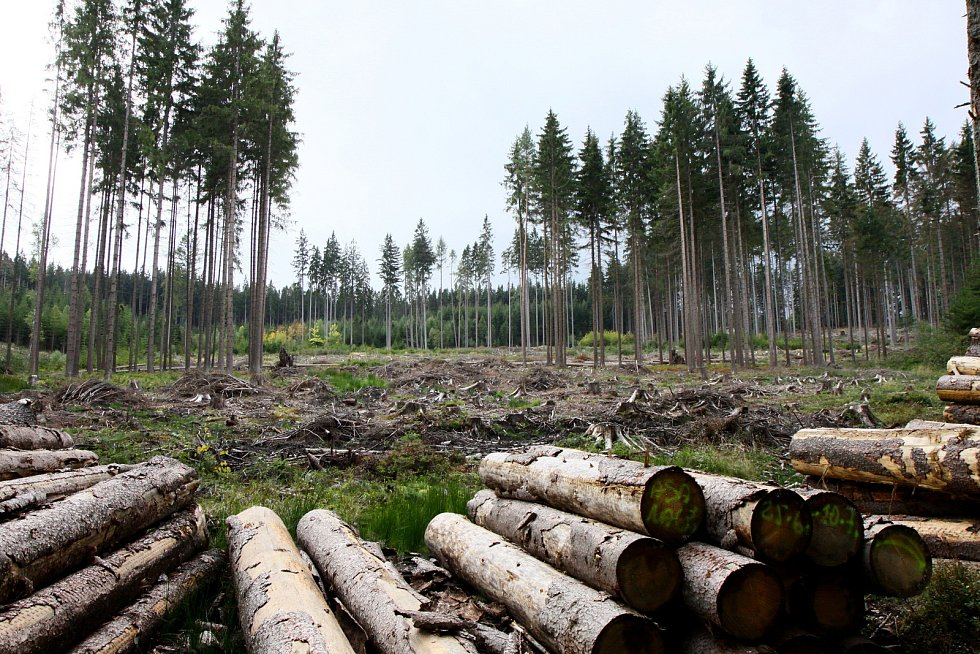 I takto dnes vypadá Šumava nedaleko Zadova a kraj tvrdí, že na tom má podíl i hospodaření správy parku.