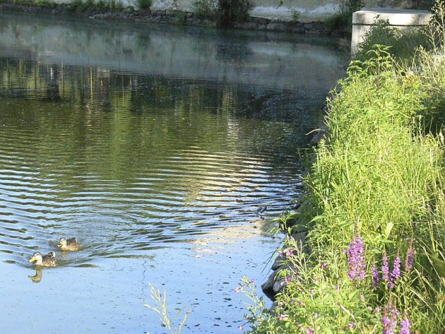RYBNÍK KE SPORTU. Ve Ktiši chtějí zrekonstruovat hráz. Pokud získají dotaci, rybník odbahní. Ilustrační foto.