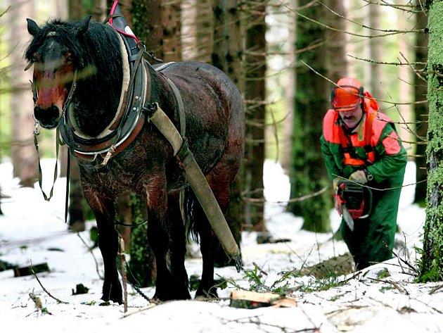 Pro koňaře by mělo být v lese více práce.