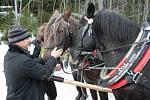 Projekt Návrat koní na Šumavu od začátku významně podporuje a prosazuje i ředitel Správy parku Jiří Mánek. Středeční jízdu si proto nenechal ujít.