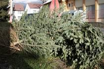 Vánoční stromky jsou jen malou částí biologicky rozložitelného odpadu, který bude končit v kompostárně v Prachaticích. Ilustrační foto
