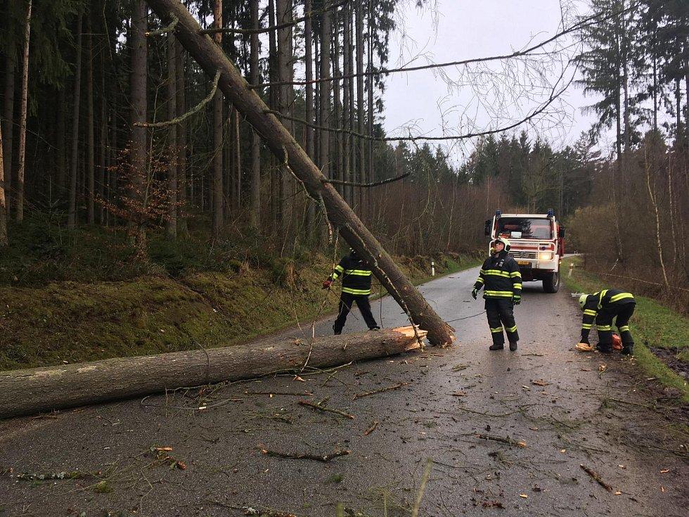 Spadlé stromy u obce Ločenice na Českobudějovicku.