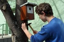 Osmáci z Vodňanky vyrobili ptačí budky, aby měli ptáci na jaře, kde hnízdit.