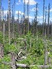 Národní park Šumava, srovnání snímků, rok 2011.