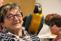 Papoušek Klára na návštěvě v Prachaticích.