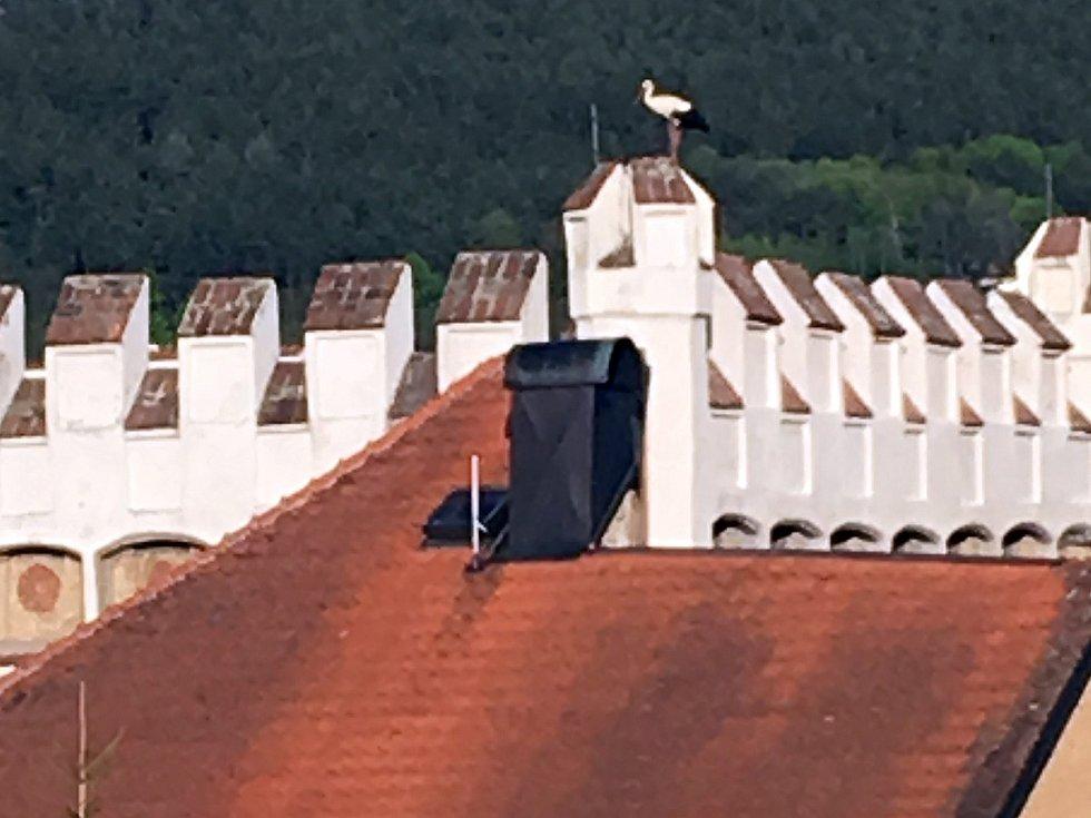 Čápi na Dolní bráně v Prachaticíc. Ilustrační foto.