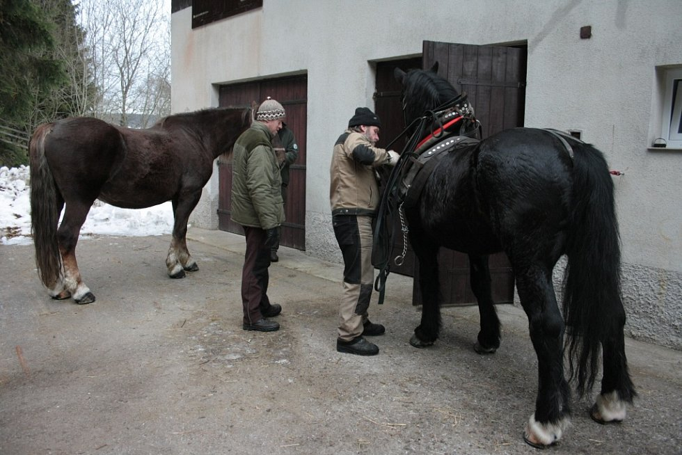 Bývalá rota pohraniční stráže v Borových Ladech, kterou před časem převzala do majetku Správa NP a CHKO Šumava, se stala domovem pro dvojici chladnokrevných koní. Ty se snaží Správa parku vracet na Šumavu.