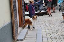 Natáčení filmu Lassie, vrať se v Prachaticích.