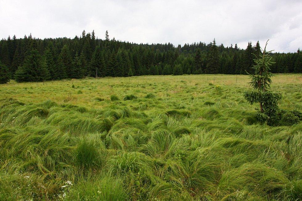 Rašeliniště u Nového Údolí, které čeká revitalizace.
