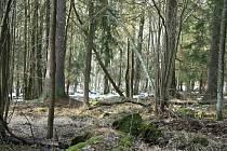 Nová přírodní rezervace na Prachaticku