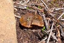 První houby.