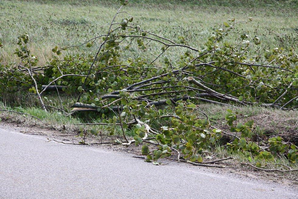Spadlý strom dnes u Nebahov na Prachaticku. Víc jsme jich v okolí Prachatic spadlých nenašli.