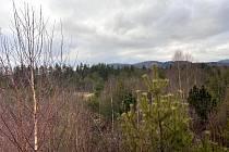 Jedno ze šumavských rašelinišť na Soumarském mostě.