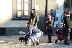 Hromadné venčení psů na prachatickém Velkém náměstí.