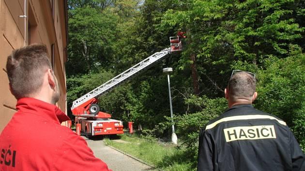 První ze stromů určených k pokácení ve Štěpánčině parku šel v pátek dopoledne k zemi. Kácení zbylých stromů by mělo pokračovat v příštím týdnu.