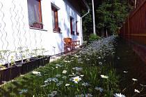Rozkvetlá zahrada.