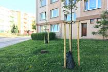 Stromy zavlaží vaky