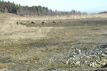 Na lesoparku již začínají pracovat stavebníci.