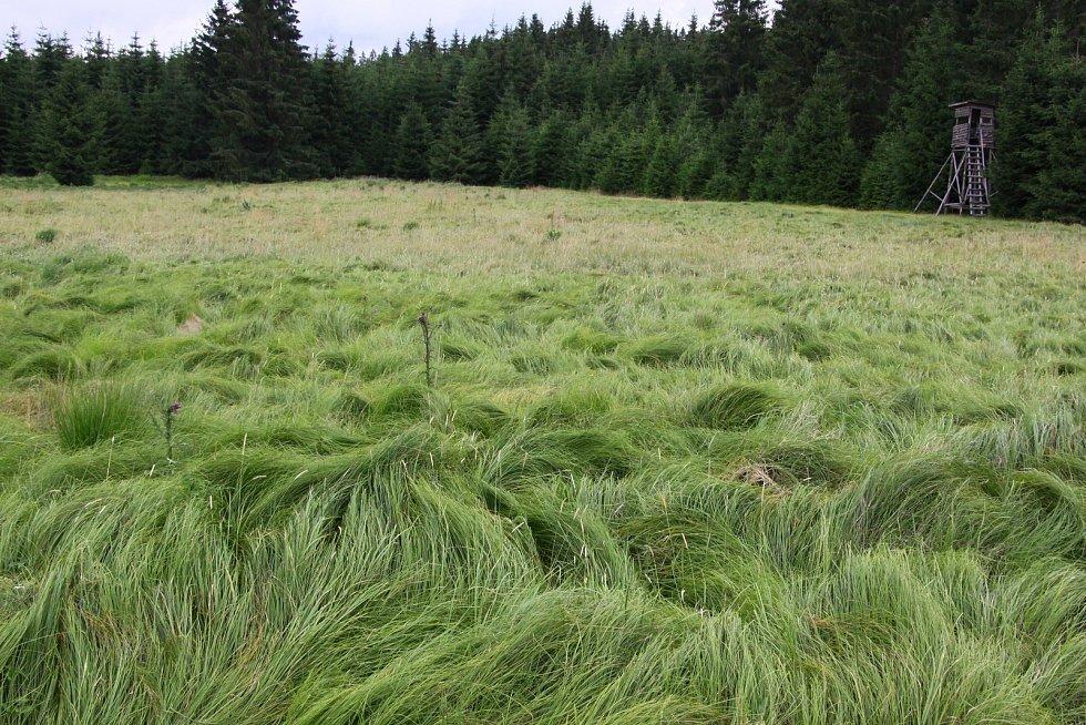 Rašeliniště u Nového Údolí.