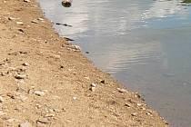 Díky zkouškám a vzorkům vody obec zjistí jaký vliv má obnova nádrže na perlorodku. Ilustrační foto.