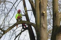 Za částečnou uzavírku vjezdu do Volar může kácení dvou nebezpečných stromů. S jejich odstraněním vydal městský úřad souhlas.