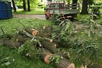 Dřevo ze Štěpánčina parku půjde na prodej.