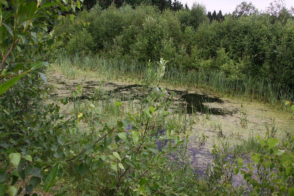 Retenční nádrž u Langreutu nad rašeliništěm.