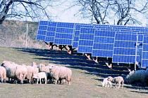 ŽIJÍ SPOLEČNĚ. O spásání trávy v areálu fotovoltaické elektrárny v Bušanovicích se starají ovce. I to je možnost, jak vhodným způsobem spojit moderní technologie s přírodou.