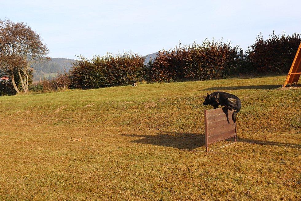 Zkoušky psů ve Volarech.
