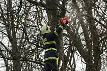 Nebezpečné větve bylo nutné podle dendrologa odstranit.