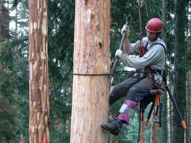 Vedle tradičních metod kácení kůrovcem napadených stromů využívala Správa tak zvané externality, tedy šetrné metody likvidace kůrovce a přibližování dřevní hmoty, jako je například loupání nastojato, lámání souší podél cest a šetrné přibližování.